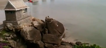 Si maimutele merg la mare