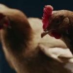 Mercedes-Benz – Chicken
