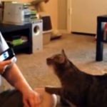 "Nu va jucati cu ""Cat translator"""