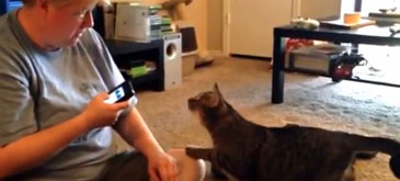 Nu va jucati cu Cat translator