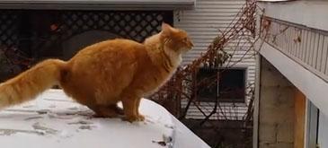 O pisica rahitica (6)