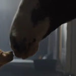 Budweiser  – Puppy Love (Super Bowl XLVIII Commercial)