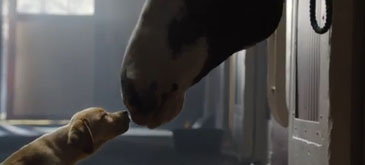 Budweiser  - Puppy Love (Super Bowl XLVIII Commercial)