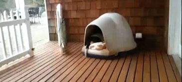 Cati caini incap intr-un cotet