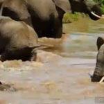 O familie de elefanti…