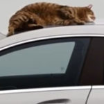 Mercedes-Benz – Cat