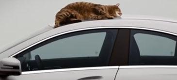 Mercedes-Benz - Cat