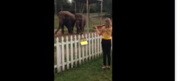 Elefanti melomani