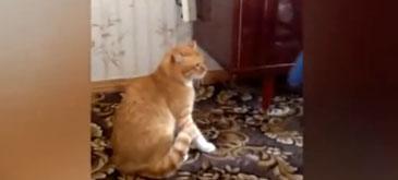 Razbunarea pisicii portocalii