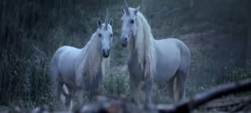 Canal+ ne explica cum au disparut unicornii