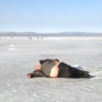 A fost descoperita o noua specie de foca