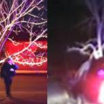 Femeia la volan (84) – Un copac a intrat in mine!